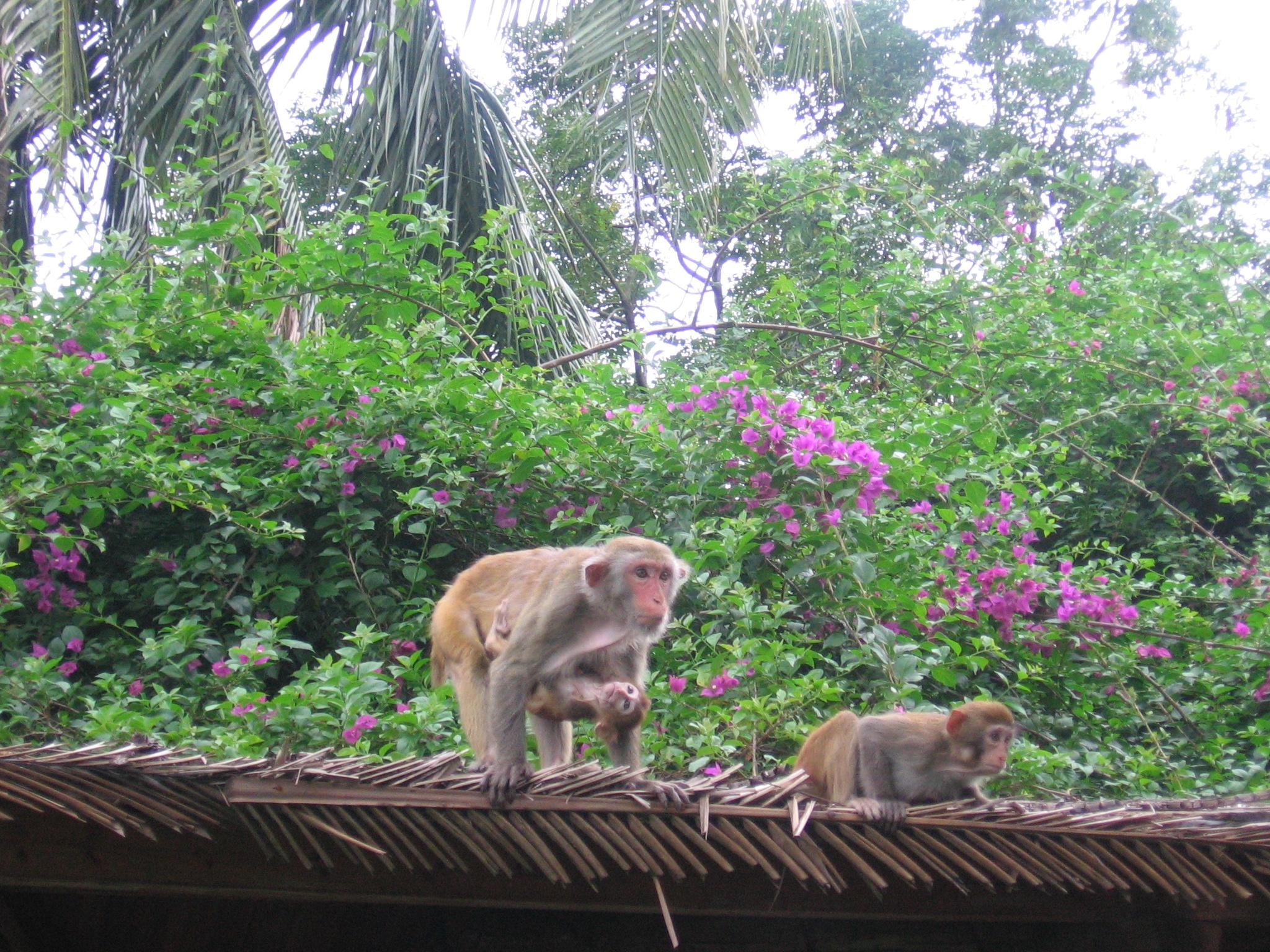 Остров обезьян 11 октября 2009г